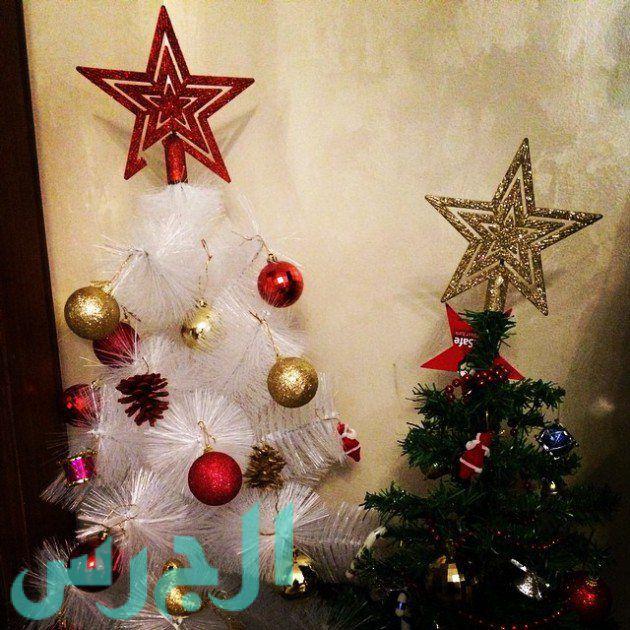 شجرة يارا نعوم (1)