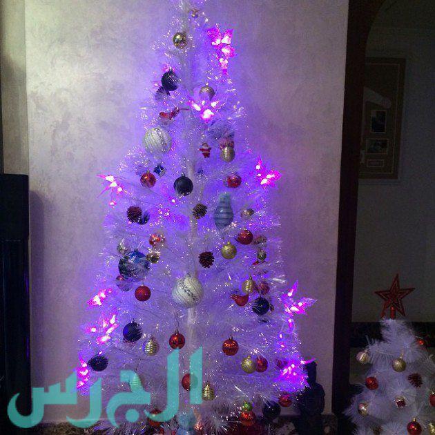 شجرة يارا نعوم (2)